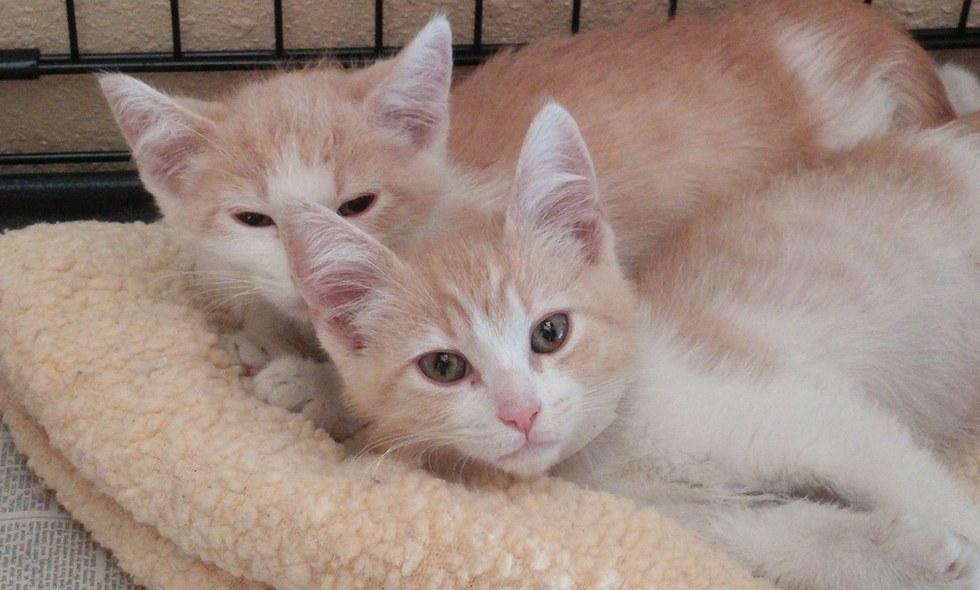 引き離されたオジーとバター【兄弟の猫】が再開した奇跡の物語!